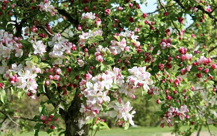 Почти 20% плодовых деревьев и виноградников повреждены вредителями