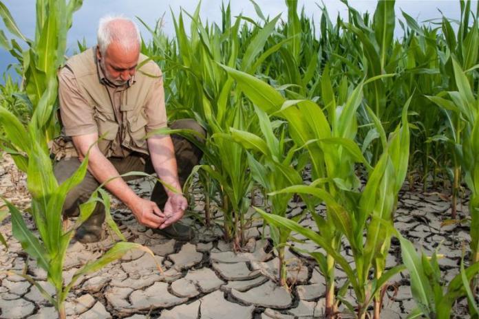 Фермерам компенсируют убытки