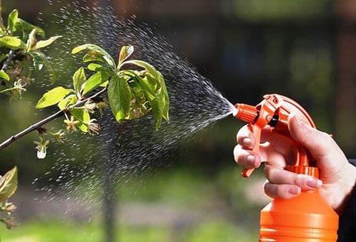 защита сада