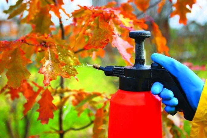 Обязательная обработка сада осенью: препараты и дозировка