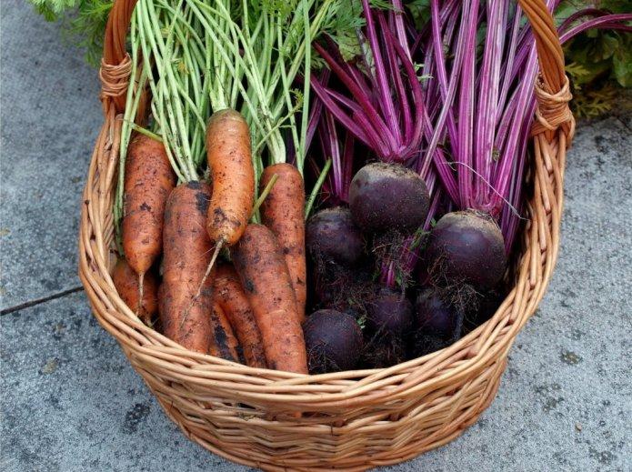 5 правил ідеального збирання буряку та моркви