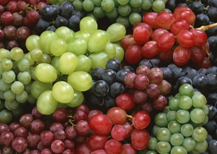 Таировский институт исследовал сорта винограда любительской селекции