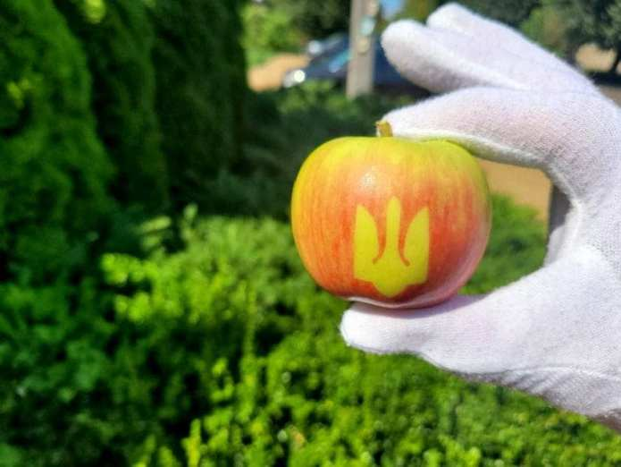 """У Вінницькій області виростили незвичайні яблука з """"тризубом"""""""