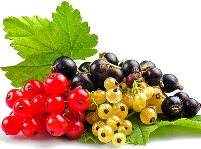Готовим ягодники к новому урожаю