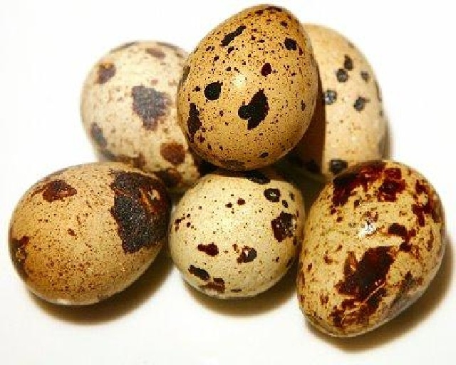 В чем польза перепелиных яиц?