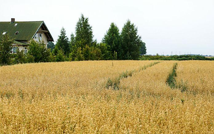 Названо область, де ціни на землю найнижчі по Україні