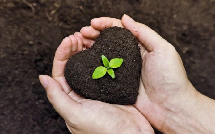 Органические удобрения — лучшее