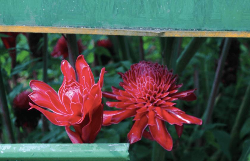Flowers in Bollywood Veggies by Nneya Richards