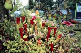 Lego plant life