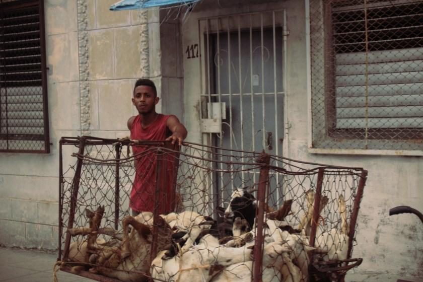 75 Goat Guy by Nneya Richards