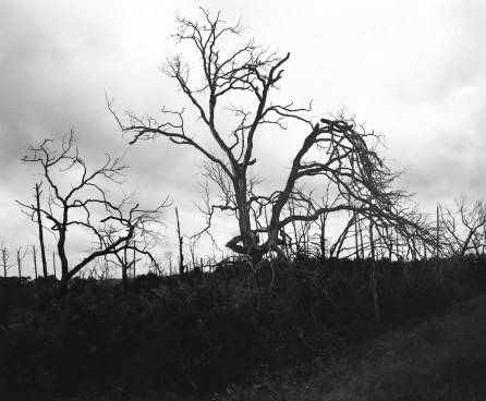 Bastrop trees 05-15 (1 of 1)