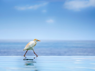 Bird on the Water by Anthony Charles