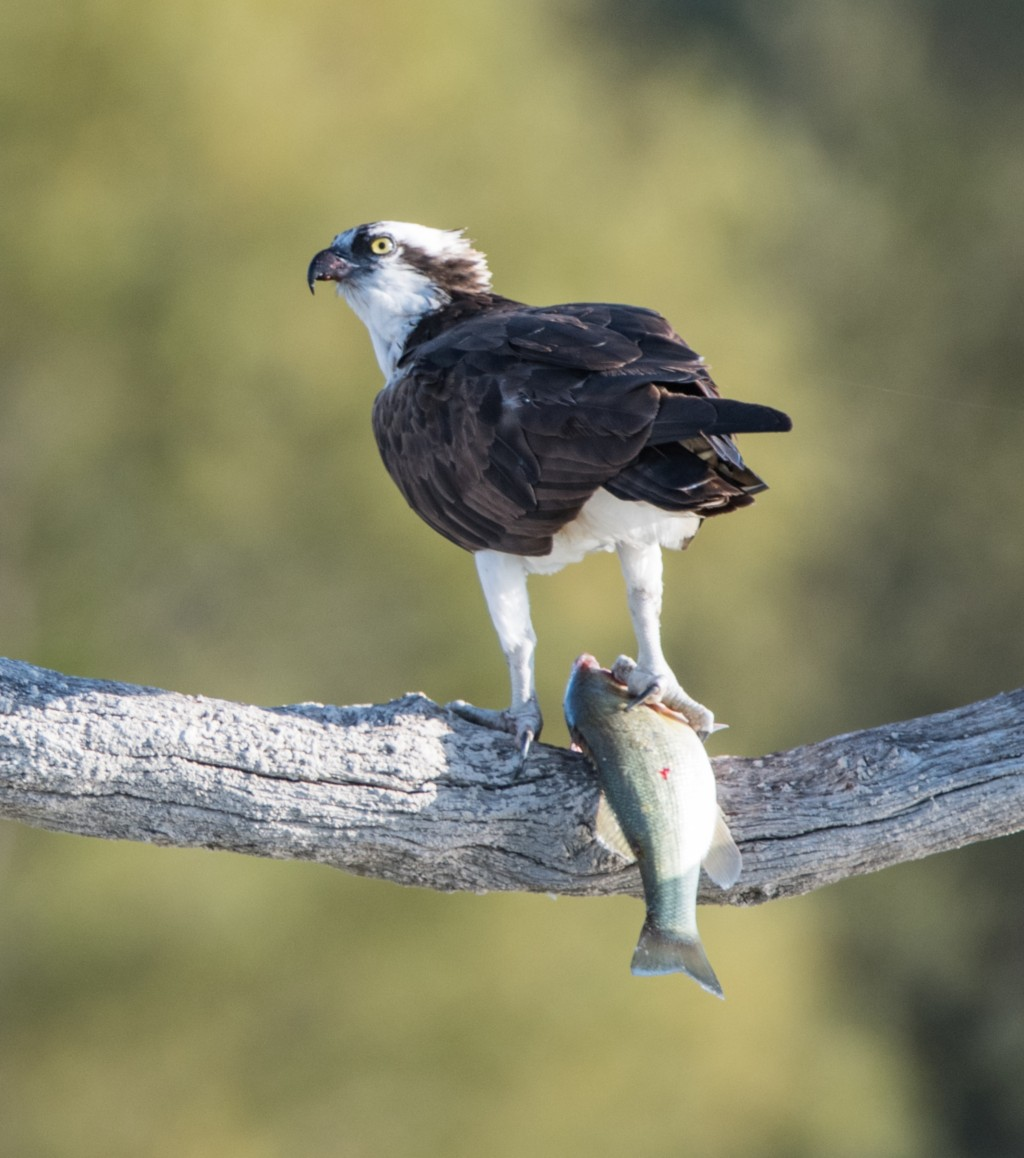 """Honorable Mention: """"What's for Lunch"""" by Dave DeVore, Class 1"""
