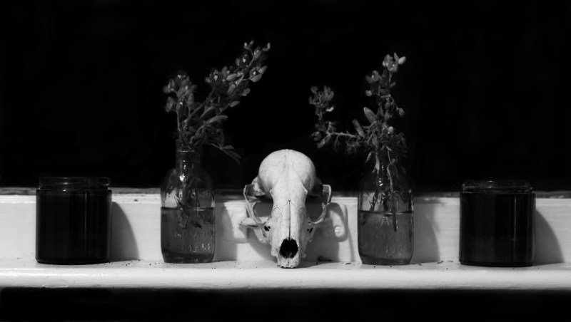 Skull'n'Flowers by Peter Livadas