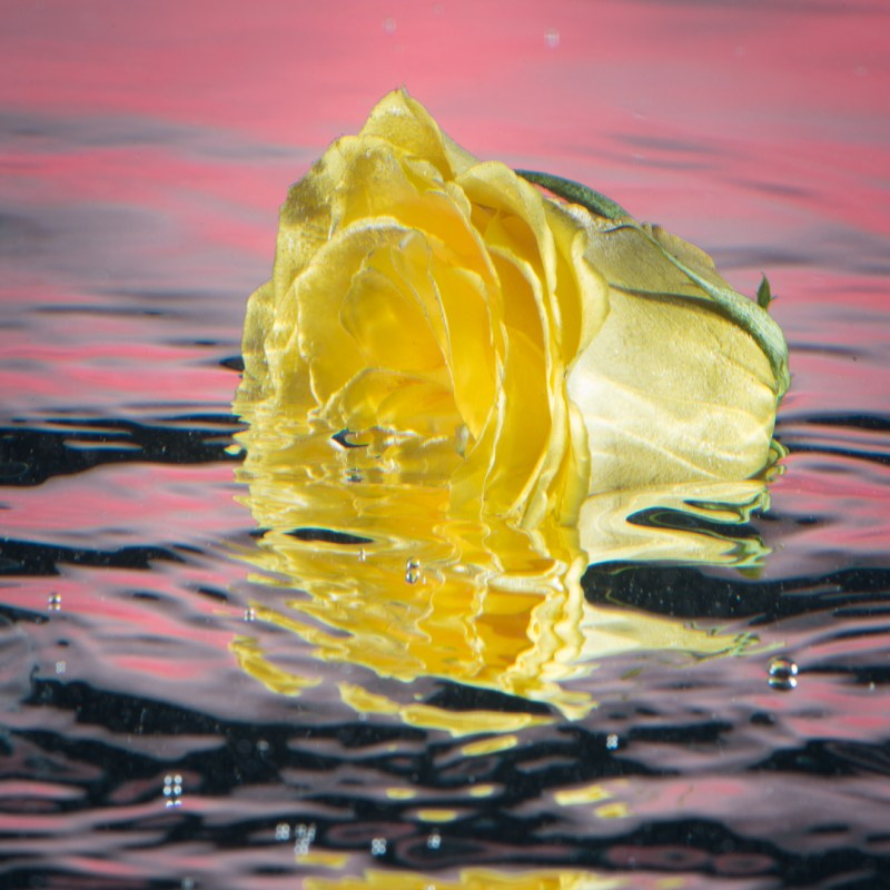 Yellow Rose of Texas by Chris China