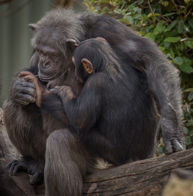 A Mothers Love by David Pine