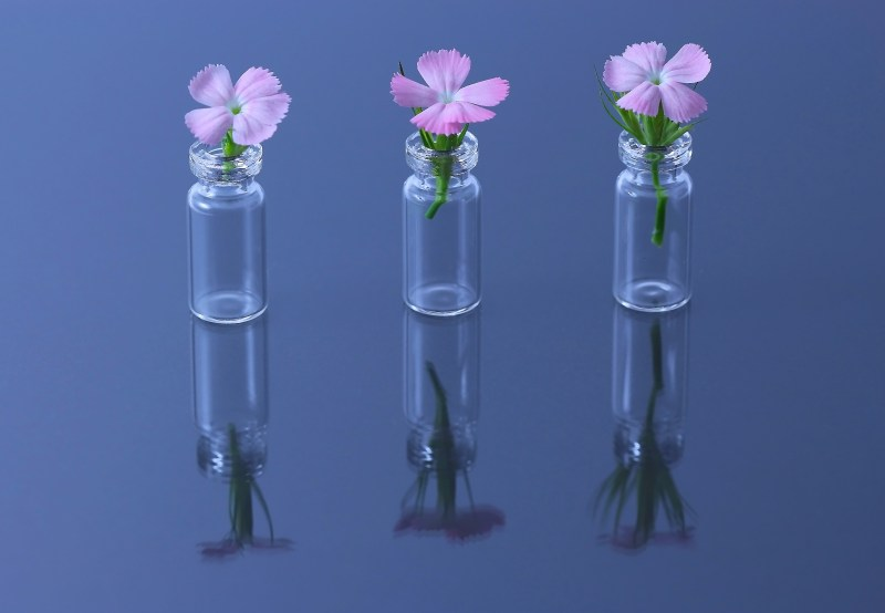 Three Tiny Flowers in Vials by Ruth Masciarelli