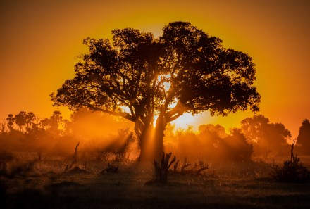 Africa Tree Sunset by Reid Wittliff