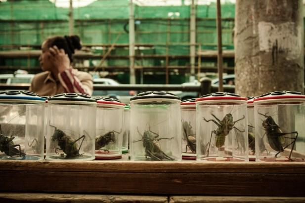 November 2008 Shanghai, China