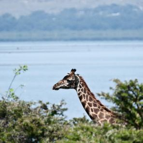 May 2007 Lake Naivasha National Park, Kenya, East Africa
