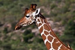 May 2007 Samburu, Kenya