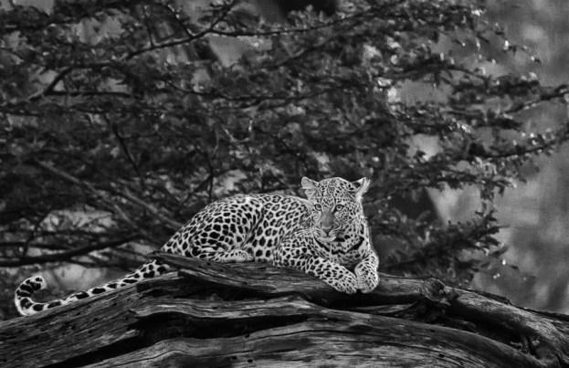 May 2007 Maasai Mara, Kenya