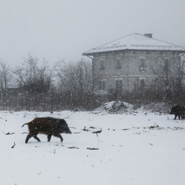 March 2013 Borki, Warszawa-Wawer, Poland