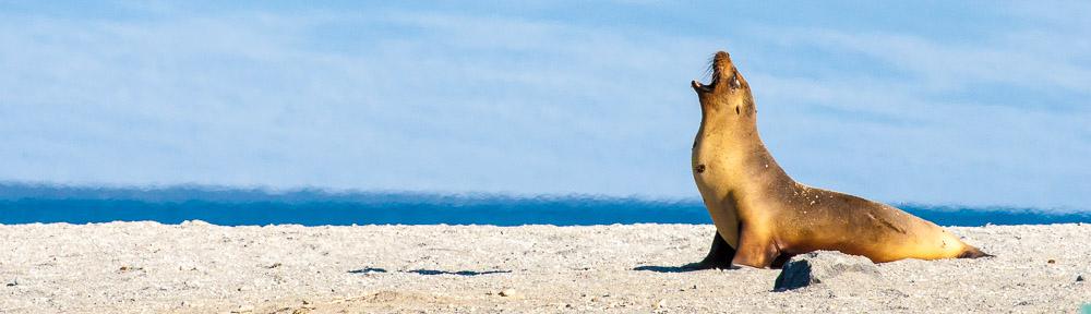November 2006 Galápagos Islands, Ecuador