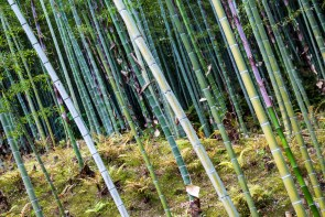 May 2013 Arashiyama bamboo forest, Kyoto, Japan
