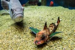May 2013 Shirahama Aquarium Kyoto University, Shirahama, Japan