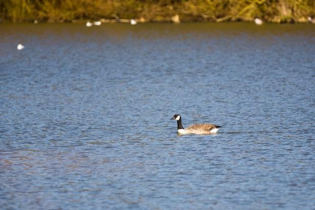 February 2014 Hatfield Forest Lake, Hatfield Forest, Essex, UK