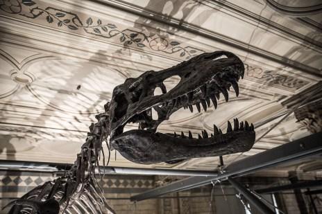 July 2014, Natural History Museum, London, UK