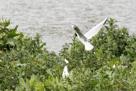 May 2015, Rye Meads Nature Reserve, Hertfordshire, England