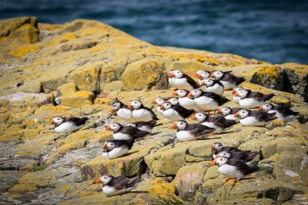 July 2015, Farne Islands, Seahouses, England, UK