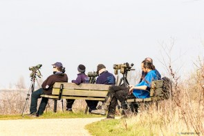 March 2016, Rainham Marshes RSPB, London, UK