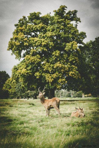 September 2017, Bushy Park, London, UK