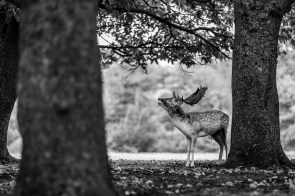October 2018, Knole Park, Sevenoaks, UK
