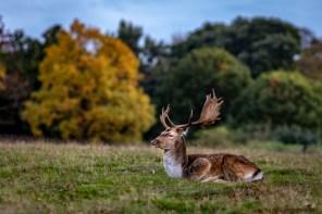 October 2018, Knole Park, Sevenoaks, UK