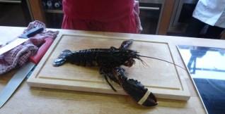 Mrs. Lobster