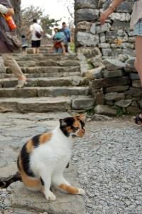 今帰仁城の看板猫。きゃわわ。
