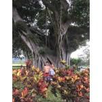 Nikkei_Family_History_Naomi_Jarris_in_Hawaii
