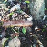 JCCCW-garden-path-brick—brightened