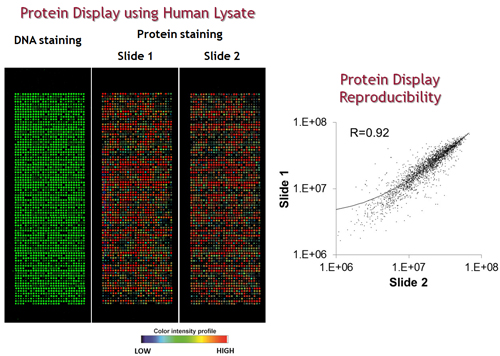 Protein Array Core NAPPA Technology