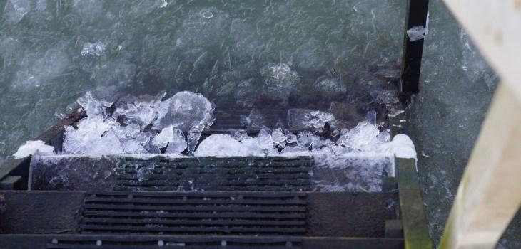 Vinterbadning i Nappedam - Vedtægterne for Nappedam Vinterbadere