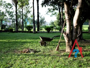 Как получить землю в садовом товариществе