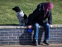 Правила выгула собак на придомовой территории