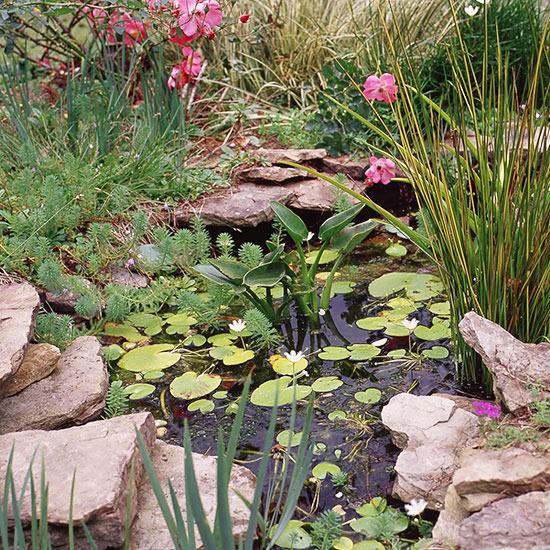 4 jezerce u dvoristu