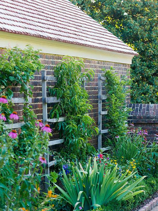5 vertikalne biljke u dvoristu