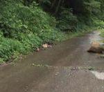 ポツンと一軒家を振り返る 福井県で黄連栽培 出作り用の家
