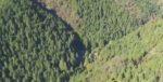 ポツンと一軒家を振り返る 東京で400年続く林業するタナカさん